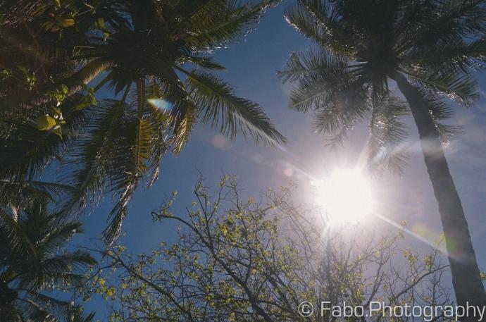 FAB_2155